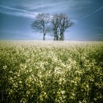 An earth dream by OlivierAccart
