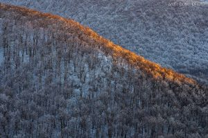 Trees on fire by ivancoric