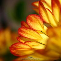 Petalas by too-much4you