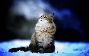 Winter - Cat by cutecolorful