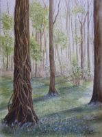 BlueBell Wood by SueMArt