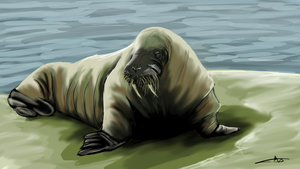34 - I am probably a Walrus by Shasel