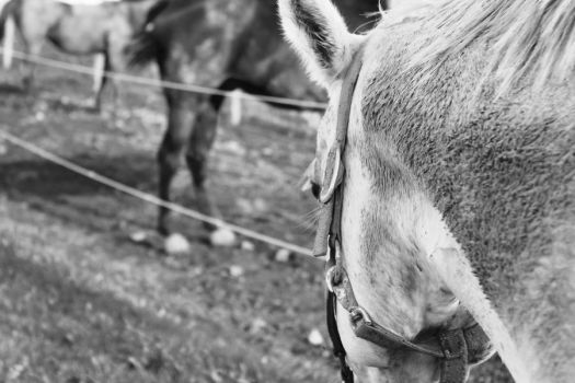 Covered in Dirt by EquusDraconis