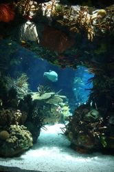 Aquarium Stock 29 by Malleni-Stock