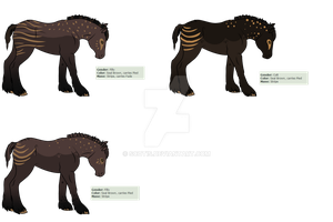 Cara X Chocolate Dipped Marshmallow foals by Scotis