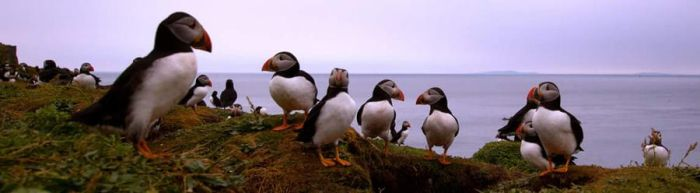 Puffin Party by Yoonett