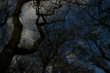 reaching up by Dave-Basford