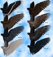Feathered Wings 1 Stock Pack by Aazari-Resources