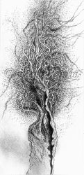 Mystic Tree 06 by Blue-Whale-Song