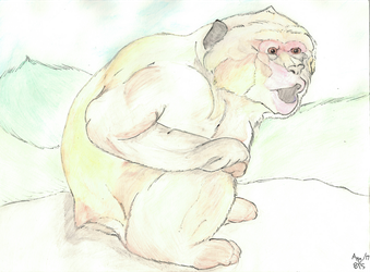 Barbary Macaque by AltaikaTau