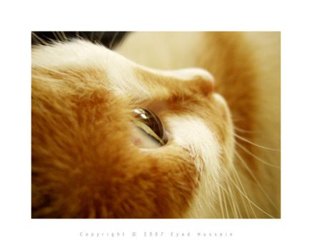 Cat 9 by eyadness