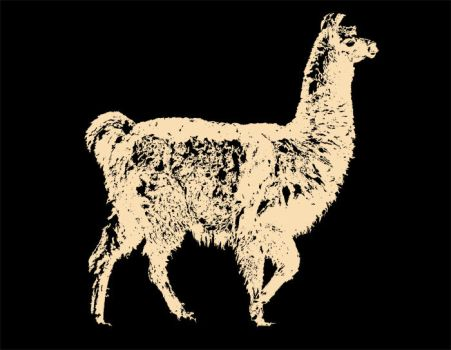 Llama for a T by marvah