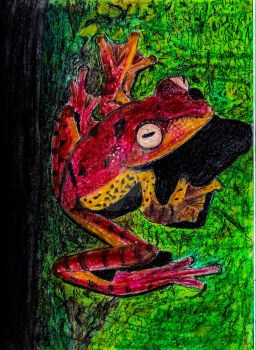 Treefrog 2.26.18 by Pyragus