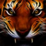 I can has fractal tiger by mediphysical