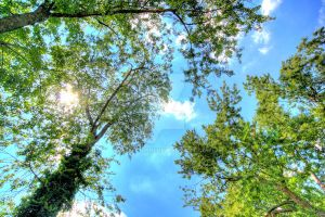 HDR Trees and Sky by Mooseushi