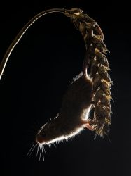 Just about hanging on by Jamie-MacArthur