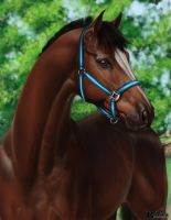 Warmblood Portrait by Ravica