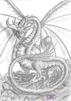 Dragon by Vanthica