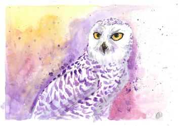 Watercolour - Snowy Owl by Sio64