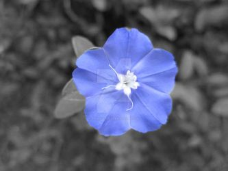 Blue Flower by sudeepjames