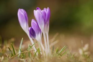 spring wish by christinegeier