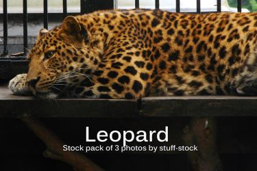Leopard Stock Pack by stuff-stock