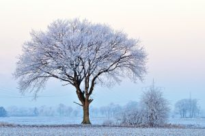blue morning by augenweide