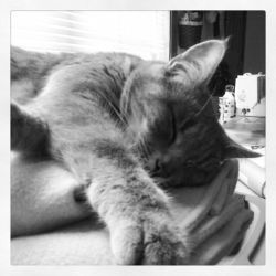 Aimee snoozing on my fleece... by PaisCharos