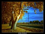 Indian Summer by mojorison
