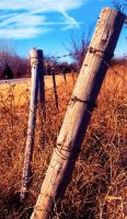 Fence Post by shutter-bug664