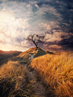 Old Tree On The Hill by MatiPS