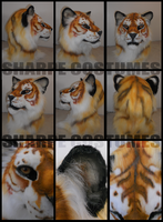 Golden tiger: FS by Sharpe19
