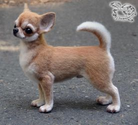 Needle felted Chihuahua by YuliaLeonovich