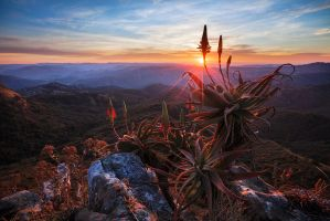 Aloe time in Africa by carlosthe