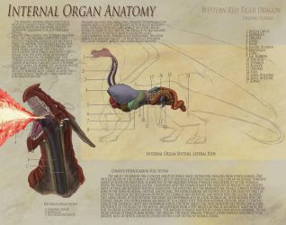 Dragon Anatomy - Organs by UberKudzu