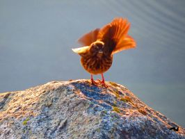 Sparrow In Movement by wolfwings1