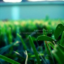 The Growth by philosophyoftime