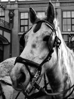 The Horse by philippsfrt