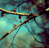 First Signs of Spring I by christinavk