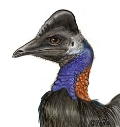 Bennett's cassowary by Reptangle
