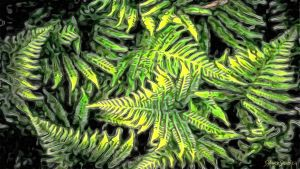 Forest FERNS by xelopid