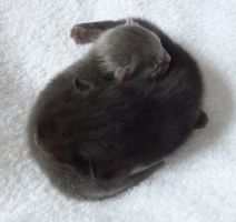 Ying and Yang Kittens by Lesh4537