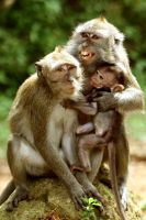 Monkey Nation by wilmil