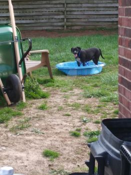 June Bug in the pool by lady-croi-tine-dubh