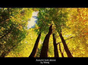 Autumn look above by niwaj