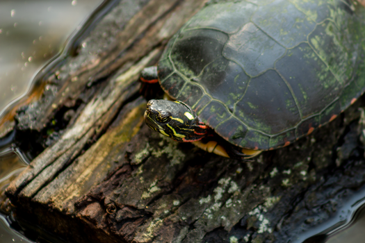 Turtle by AaronMk