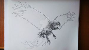 Phoenix - illustration to my book (WIP) by HimmeltheBlue