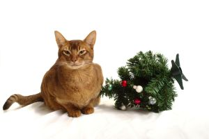 Abyssinian Cat and Mini Christmas Tree Stock 2 by FurLined
