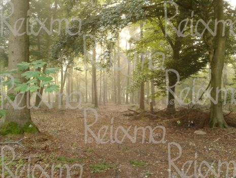 Misty Forest by Reixma