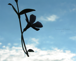 Flying flower by Taychimono